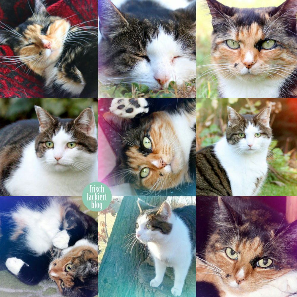 collage_katzen